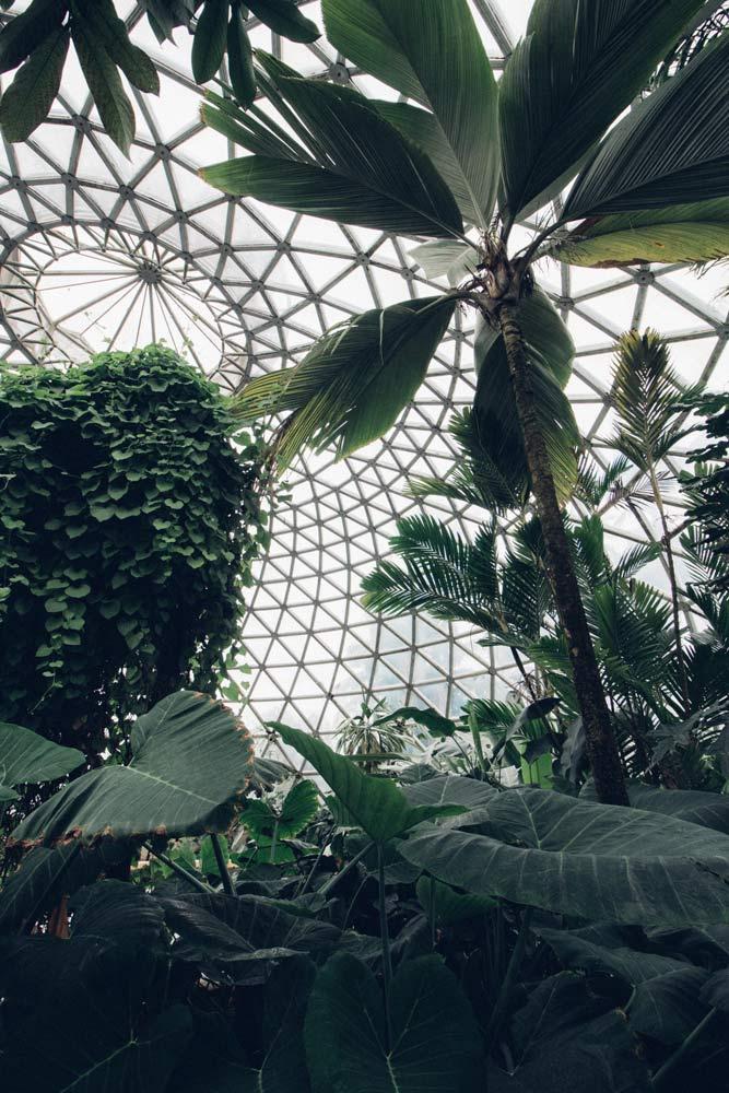 Mount Coot-tha Botanic Gardens, Mount Coot-Tha, Queensland Australia