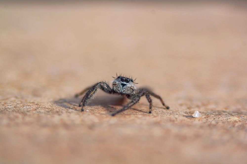 Skuon - most common phobias